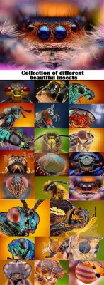 Collection of different beautiful insects